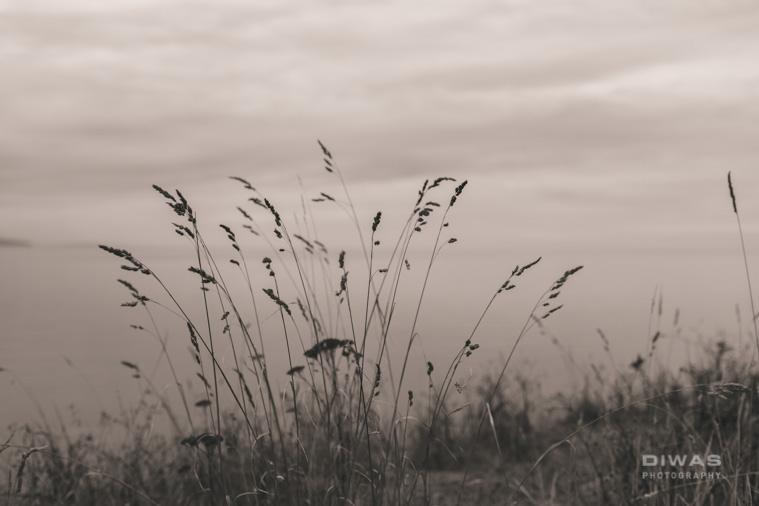 westseattlephotography-1